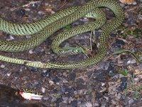 snake body